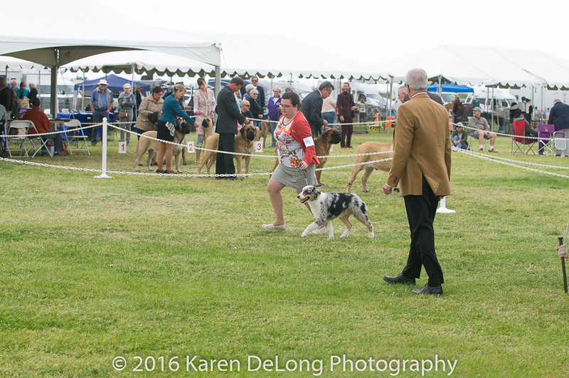 20161120_Greater Sierra Vista Kennel Club_Aussies-34