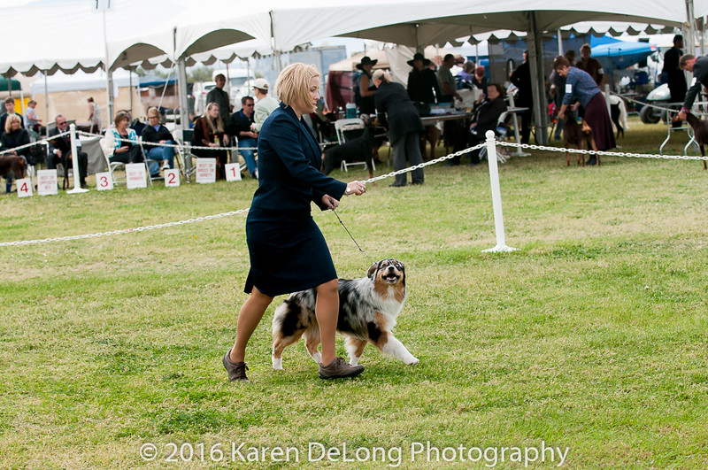 20161120_Greater Sierra Vista Kennel Club_Aussies-305