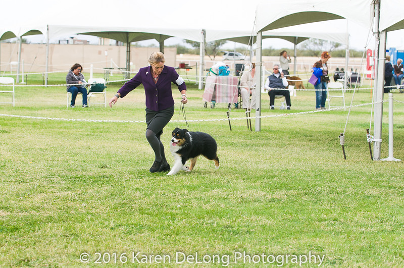 20161120_Greater Sierra Vista Kennel Club_Aussies-85