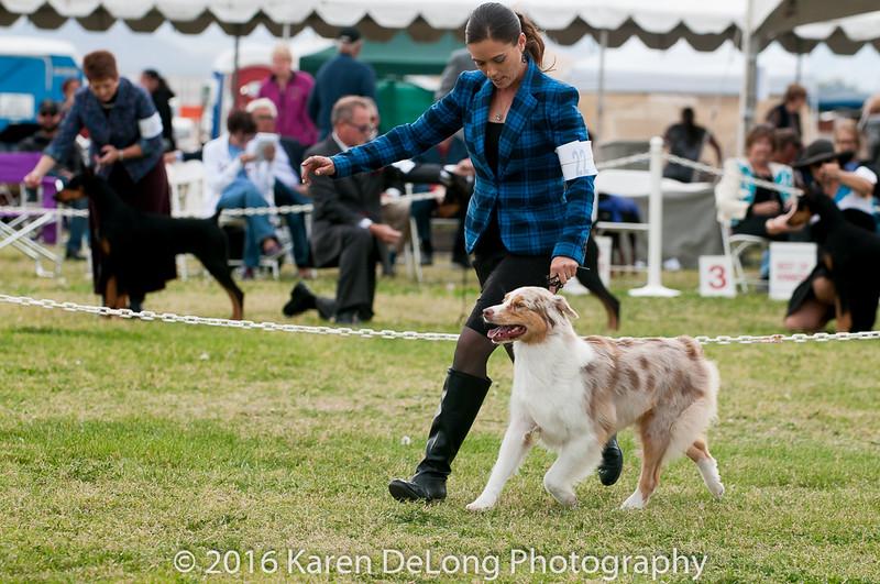 20161120_Greater Sierra Vista Kennel Club_Aussies-318