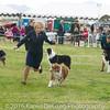 20161120_Greater Sierra Vista Kennel Club_Aussies-187
