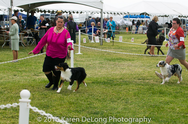 20161120_Greater Sierra Vista Kennel Club_Aussies-9