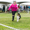 20161120_Greater Sierra Vista Kennel Club_Aussies-101