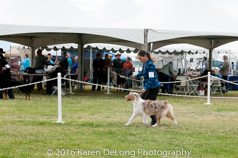 20161120_Greater Sierra Vista Kennel Club_Aussies-317