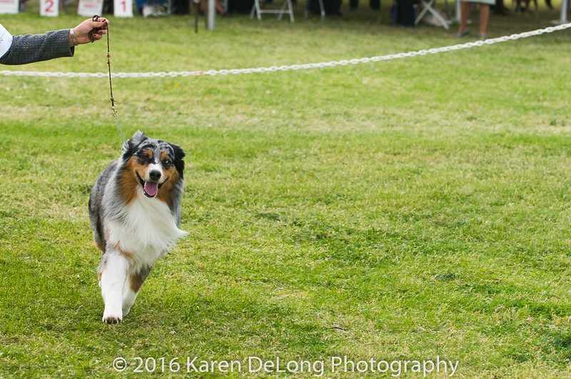 20161120_Greater Sierra Vista Kennel Club_Aussies-129