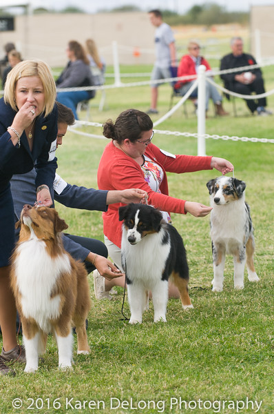 20161120_Greater Sierra Vista Kennel Club_Aussies-169
