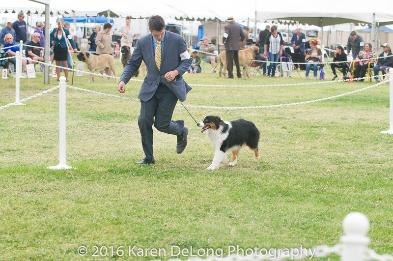 20161120_Greater Sierra Vista Kennel Club_Aussies-62