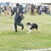 20161120_Greater Sierra Vista Kennel Club_Aussies-62