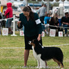 20161120_Greater Sierra Vista Kennel Club_Aussies-215
