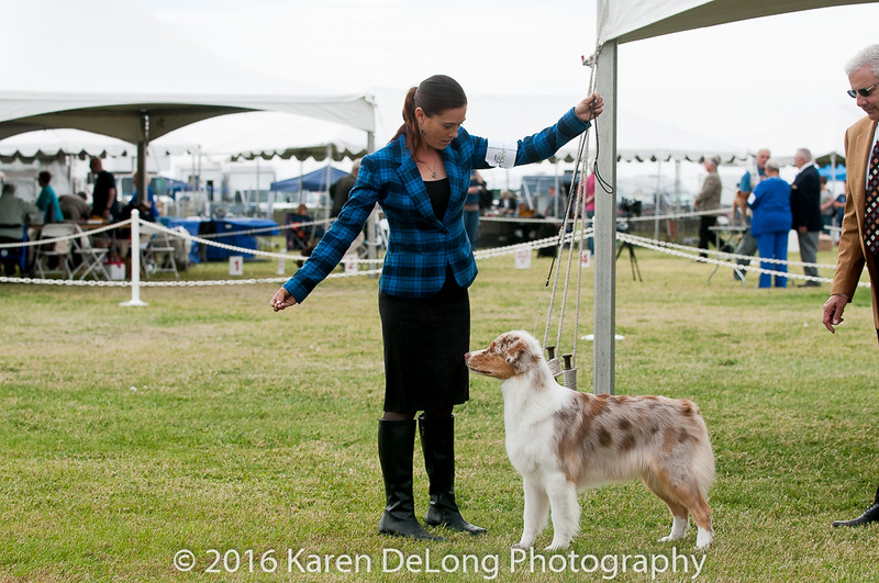 20161120_Greater Sierra Vista Kennel Club_Aussies-316