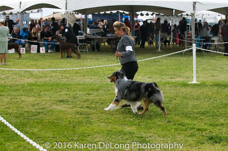 20161120_Greater Sierra Vista Kennel Club_Aussies-135