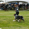 20161120_Greater Sierra Vista Kennel Club_Aussies-135
