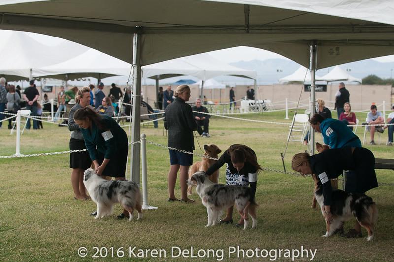 20161120_Greater Sierra Vista Kennel Club_Aussies-272