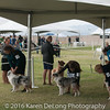 20161120_Greater Sierra Vista Kennel Club_Aussies-272