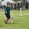 20161120_Greater Sierra Vista Kennel Club_Aussies-285