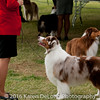 20161120_Greater Sierra Vista Kennel Club_Aussies-376
