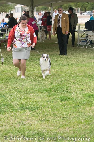 20161120_Greater Sierra Vista Kennel Club_Aussies-29