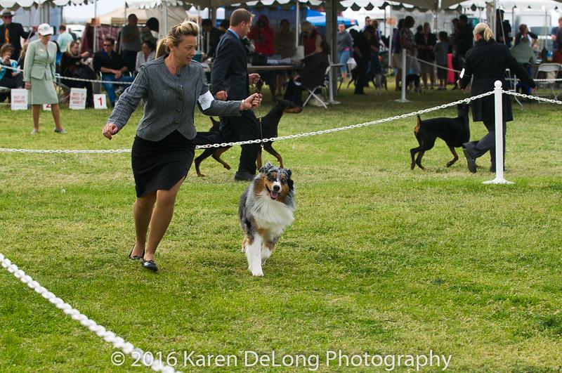 20161120_Greater Sierra Vista Kennel Club_Aussies-146