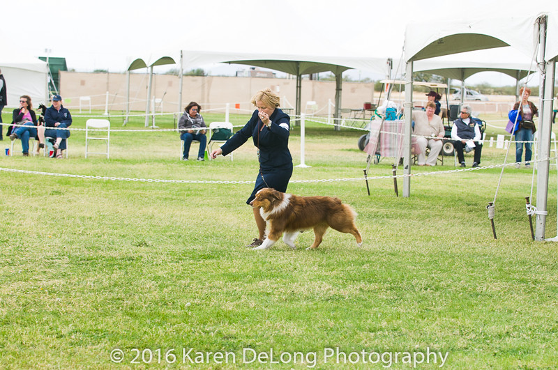 20161120_Greater Sierra Vista Kennel Club_Aussies-74