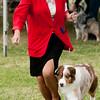 20161120_Greater Sierra Vista Kennel Club_Aussies-365
