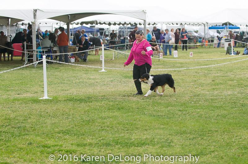 20161120_Greater Sierra Vista Kennel Club_Aussies-21