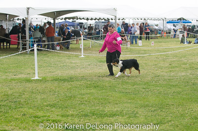20161120_Greater Sierra Vista Kennel Club_Aussies-21