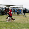 20161120_Greater Sierra Vista Kennel Club_Aussies-368