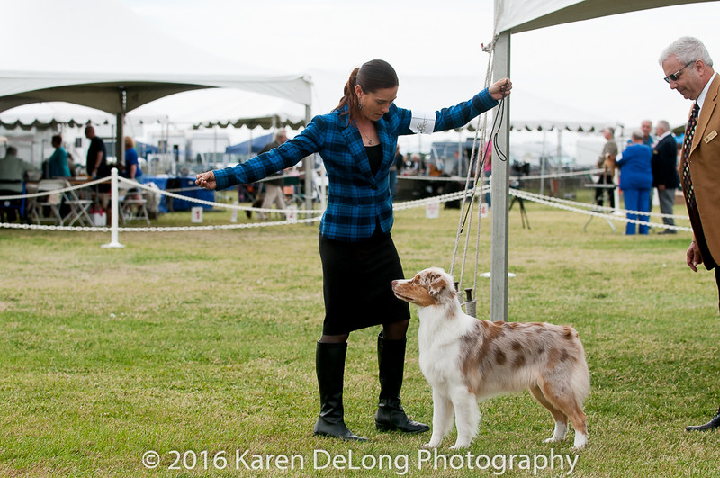 20161120_Greater Sierra Vista Kennel Club_Aussies-315
