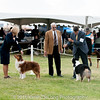 20161120_Greater Sierra Vista Kennel Club_Aussies-205
