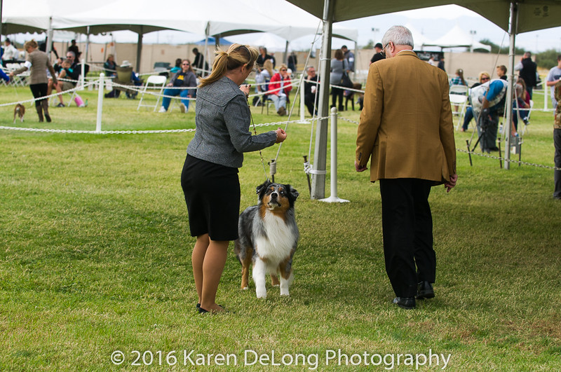 20161120_Greater Sierra Vista Kennel Club_Aussies-141