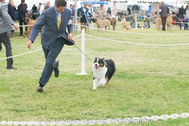 20161120_Greater Sierra Vista Kennel Club_Aussies-64