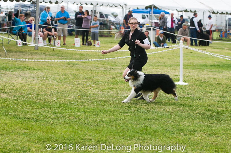 20161120_Greater Sierra Vista Kennel Club_Aussies-123