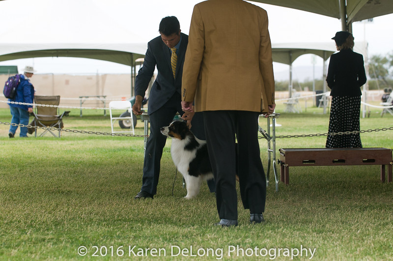 20161120_Greater Sierra Vista Kennel Club_Aussies-47