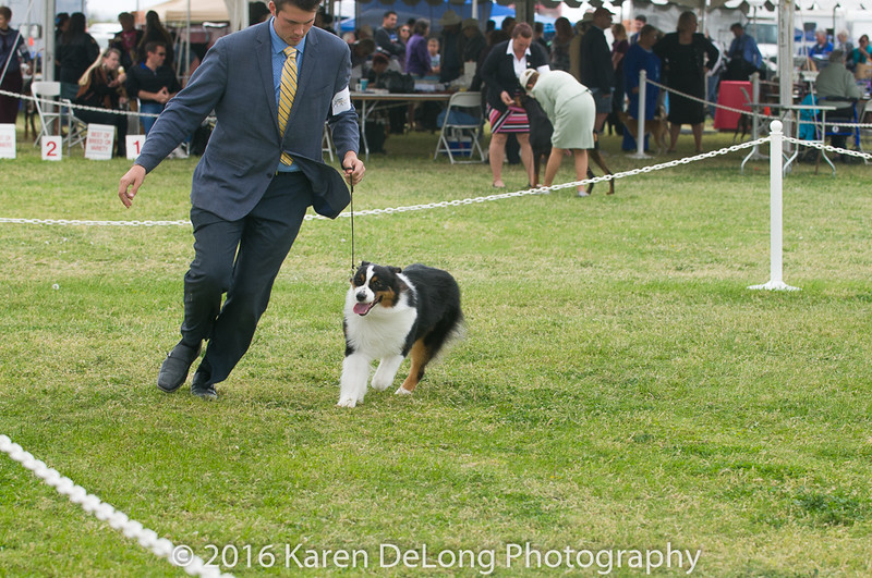 20161120_Greater Sierra Vista Kennel Club_Aussies-53
