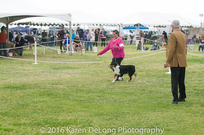 20161120_Greater Sierra Vista Kennel Club_Aussies-19