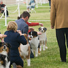 20161120_Greater Sierra Vista Kennel Club_Aussies-162