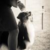 20161120_Greater Sierra Vista Kennel Club_Aussies-256