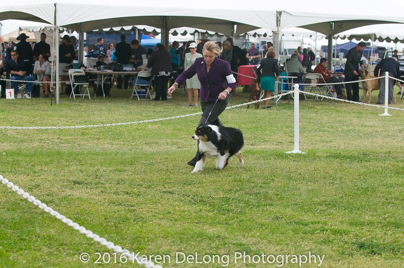 20161120_Greater Sierra Vista Kennel Club_Aussies-69