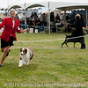 20161120_Greater Sierra Vista Kennel Club_Aussies-371