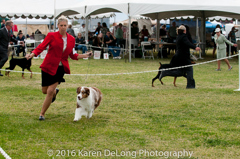 20161120_Greater Sierra Vista Kennel Club_Aussies-371