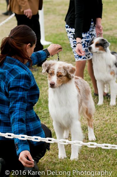 20161120_Greater Sierra Vista Kennel Club_Aussies-342