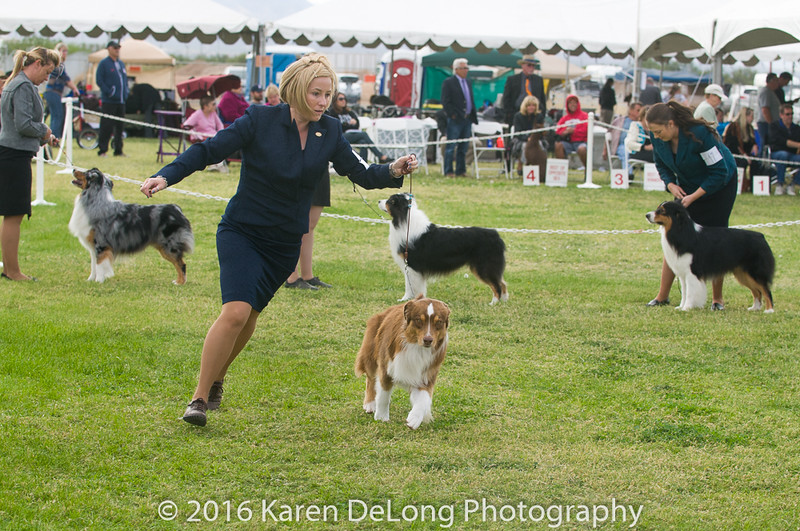 20161120_Greater Sierra Vista Kennel Club_Aussies-190