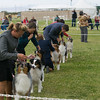 20161120_Greater Sierra Vista Kennel Club_Aussies-147