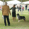 20161120_Greater Sierra Vista Kennel Club_Aussies-126