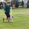 20161120_Greater Sierra Vista Kennel Club_Aussies-287
