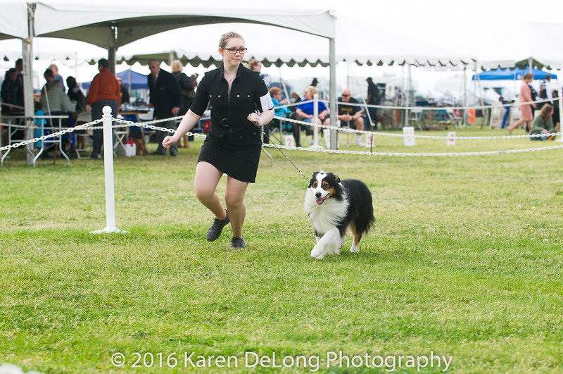 20161120_Greater Sierra Vista Kennel Club_Aussies-100