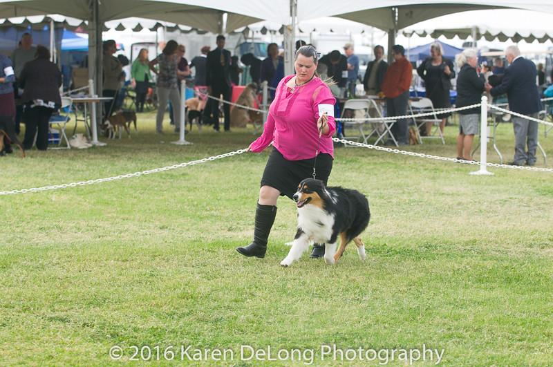 20161120_Greater Sierra Vista Kennel Club_Aussies-122