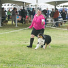 20161120_Greater Sierra Vista Kennel Club_Aussies-122