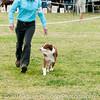 20161120_Greater Sierra Vista Kennel Club_Aussies-239