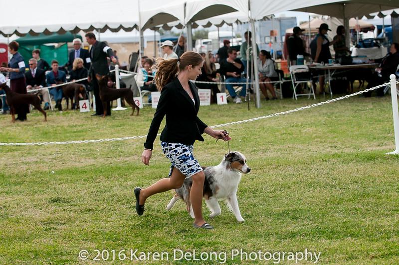 20161120_Greater Sierra Vista Kennel Club_Aussies-294